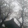 洪福寺の桜