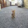 子猫、オンリー?