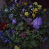 秋のお花たち