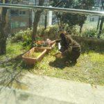 新しい住人さんはお花好き♪
