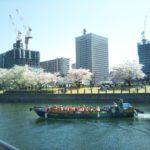横浜は桜が満開♪