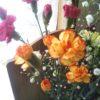 海老名とバラと母の日と