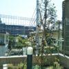 【ノブレス横浜】エントランスとお庭のお花たち