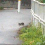 都会で暮らす小動物たち